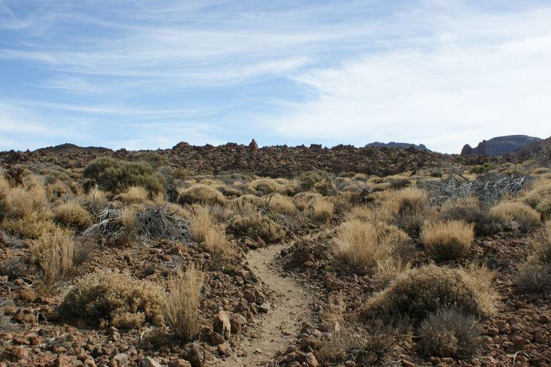 Tree Desert Rural Scene Sky Landscape Plant