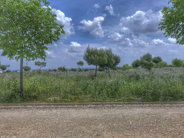 Parque Solitario Plant Tree Cloud - Sky Growth Sky Nature Beauty In Nature Land Tranquil Scene Landscape Environment Scenics - Nature
