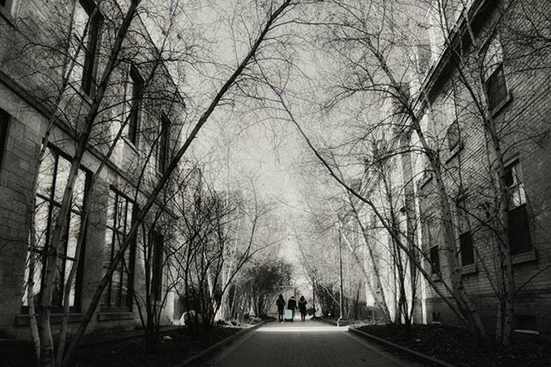 Road along trees in city