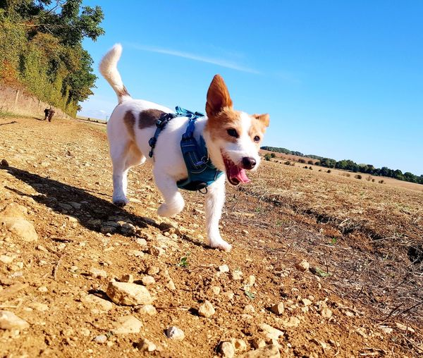 EyeEm Selects Pets Dog Protruding Sunlight Sky