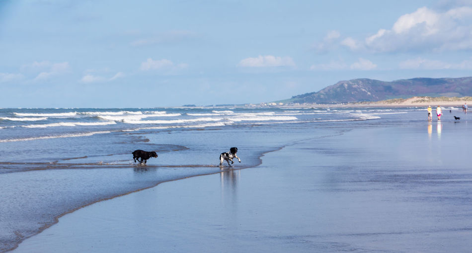 Dogs running at sea shore against sky