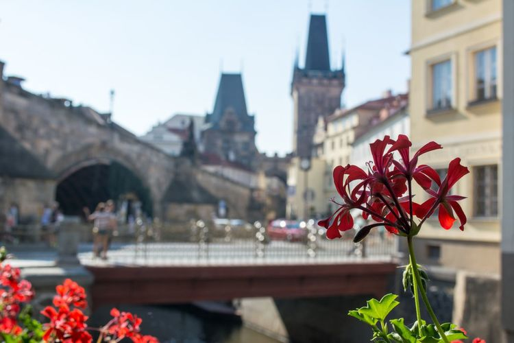 Red flower blooming by historic building
