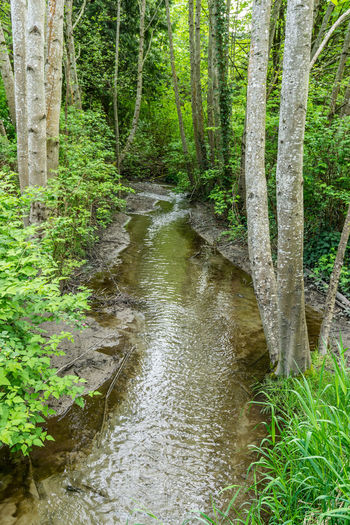 Stream flowing in forest