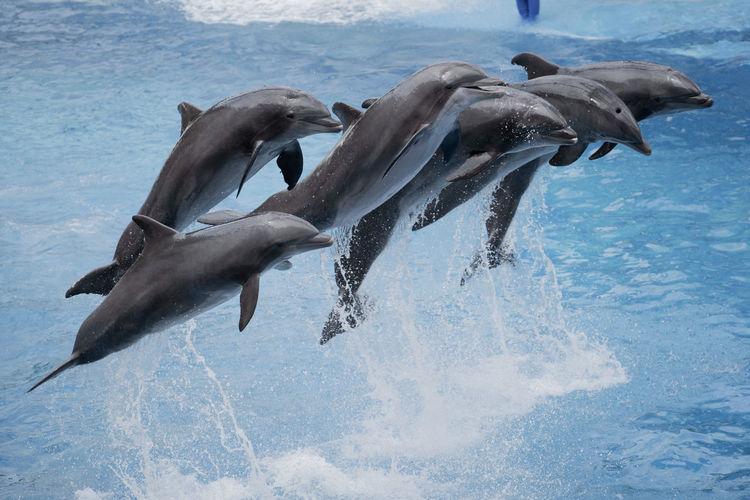 Dolphin synchronised jump
