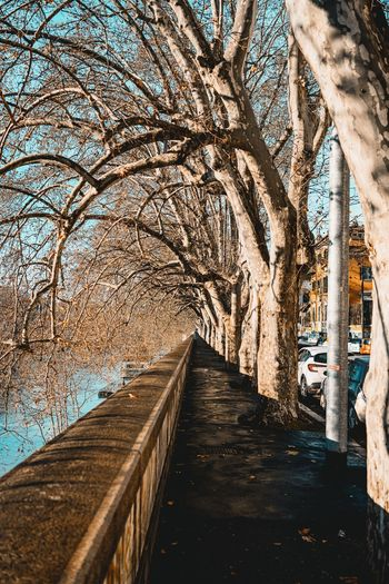 Empty footpath along bare trees and plants
