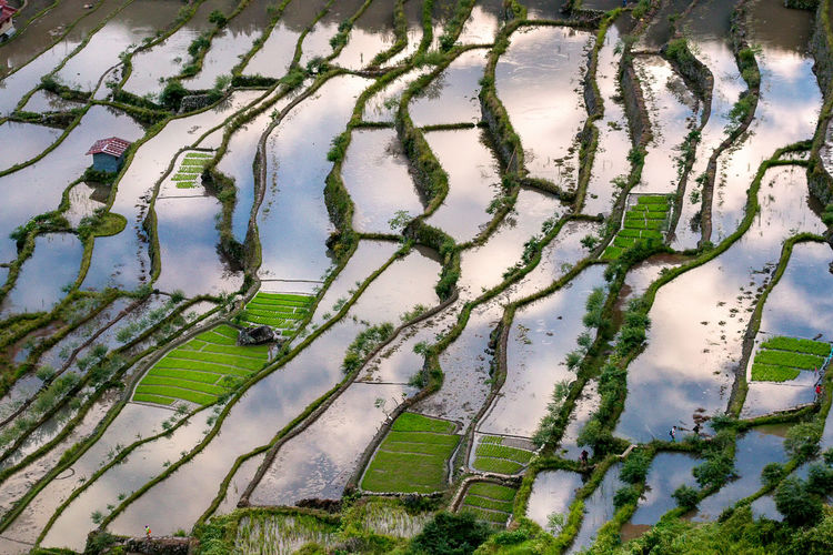 Trekking in Batad Philippines Batad Colors EyeEm Nature Lover EyeEm Selects EyeEm Gallery EyeEmNewHere Mirror Philippines Rice Paddy Sky Reflection Agriculture Beauty In Nature Extreme Weather Flood Landscape Mirror Reflection Outdoors Rice Terraces Water