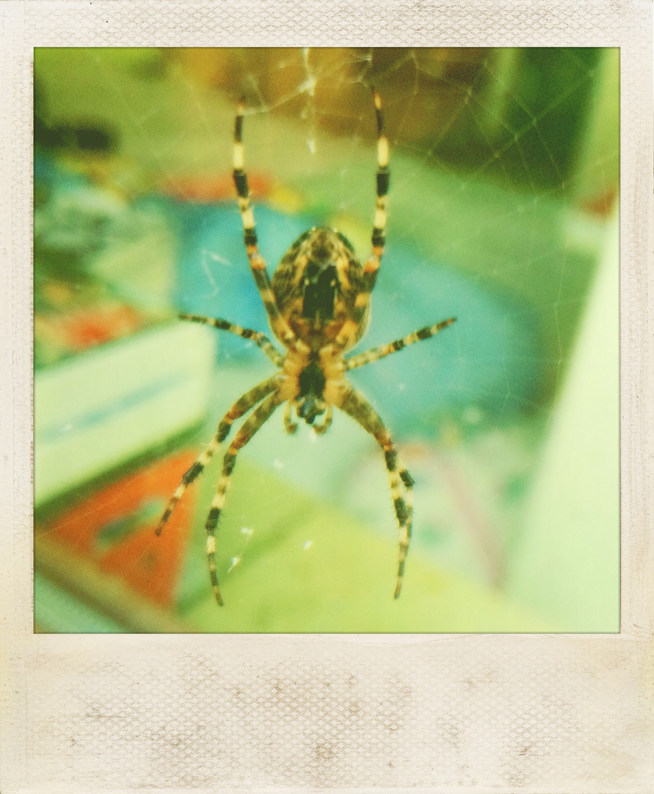 transfer print, insect, one animal, close-up, animal themes, auto post production filter, spider, wildlife, indoors, animals in the wild, focus on foreground, selective focus, spider web, no people, day, nature, glass - material, window, detail