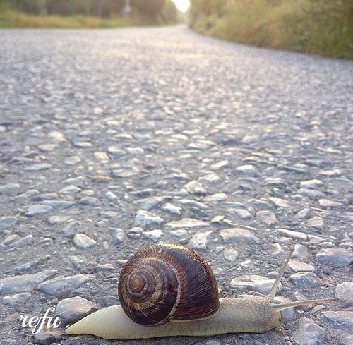 Günaydın 🌞 Sabah Yürüyüşümdenbirkare 🚶🚶🏃 Salyangoz 🐚 Yolculuk Nereye Boyle 😄 Photography