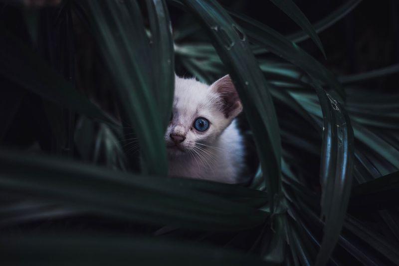 Portrait of a shy kitten