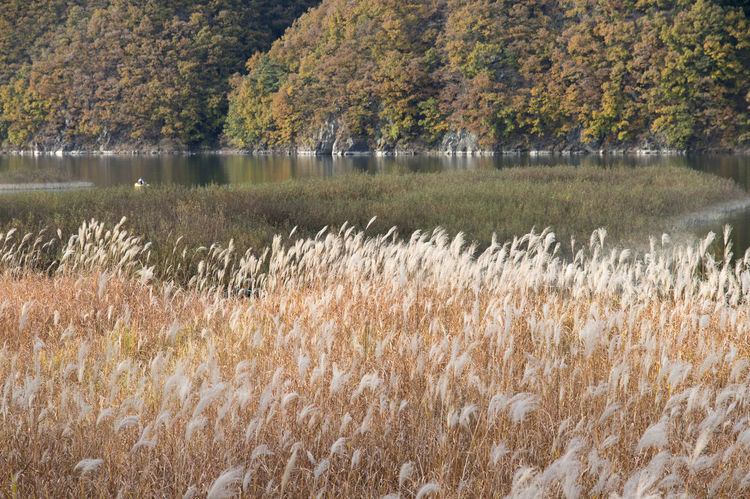 autumn landscape at Janggye Tourism Place in Okcheon, Chungbuk, South Korea Autumn Janggye Okcheon Riverside Autumn Beauty In Nature Day Grass Growth Lake Landscape Nature No People Outdoors Plant River Scenics Tranquil Scene Tranquility Tree Water