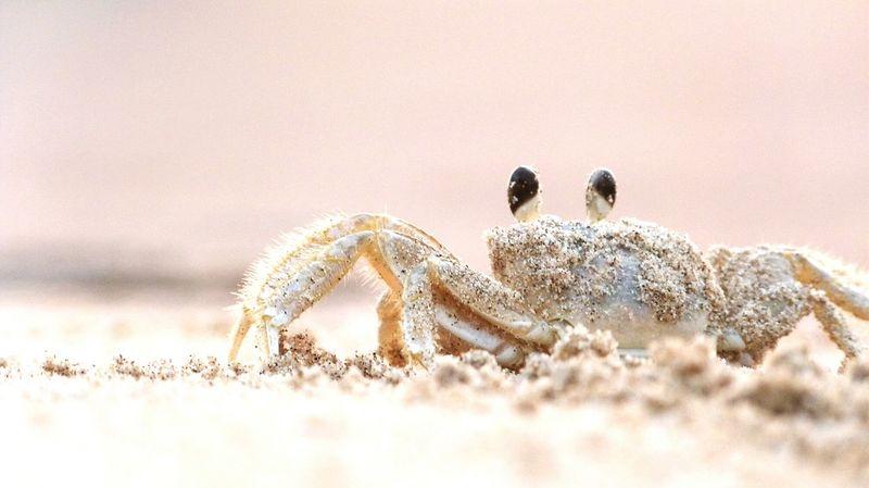 Animals In The Wild Animal Wildlife Animal Day Beach No People Outdoors Nature Crab Crab Time Crabfishing