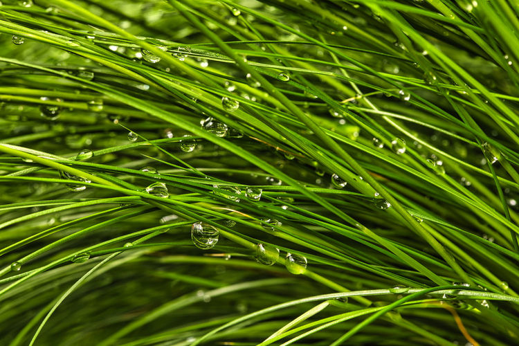 Full frame shot of raindrops on leaf