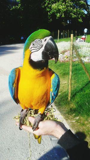 Hi! Riico Check This Out Taking Photos Cute♡ Bird Photography Peroquet