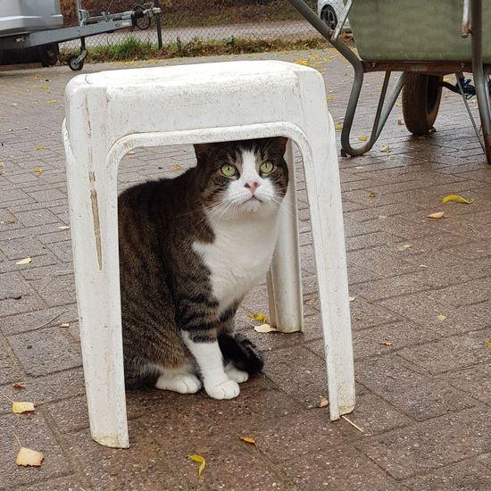 shelter for the rain Hide And Seek Rain Pets Feline Domestic Cat Animal Themes
