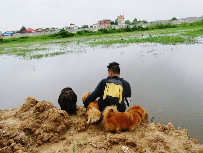 Pets Dog One Animal Rear View Full Length Only Men One Person Sitting Mammal People Adults Only Adult Outdoors Men Fog Beauty In Nature Water One Man Only Nature Day