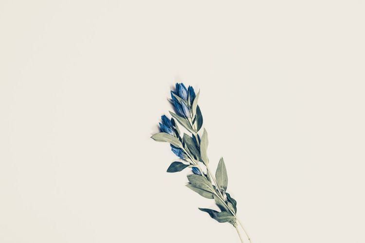 Studio Shot Plant Flower Fragility Nature White Background No People Beauty In Nature Close-up Leaf Flower Head Wilted Plant Day