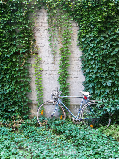 URBANANA #urbanana: The Urban Playground Architecture Available Light Bicycle Built Structure Creeper Plant Day Green Color Growth Ivy Land Vehicle Leaf Mode Of Transportation Nature No People Outdoors Plant Plant Part Stationary Streetphotography Transportation Tree Wall - Building Feature