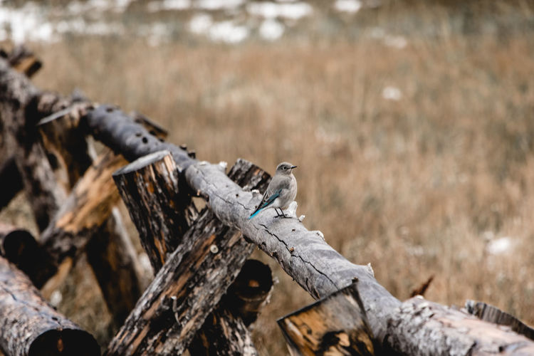 View of a bird on wooden log