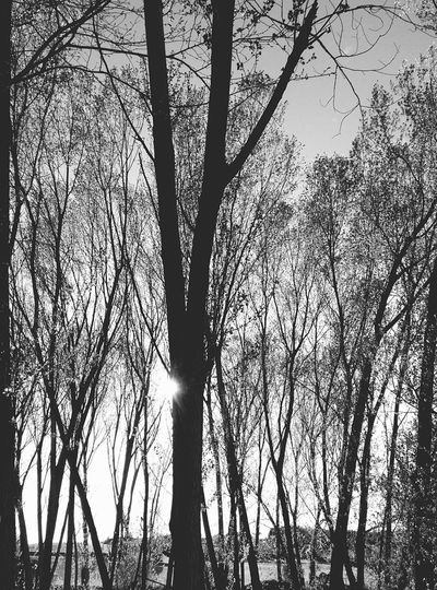 Arbres Naturelovers Naturelove Natural Beauty AWalkInTheWoods Nature Photography Nature_perfection Lifenature Tree_collection  Arbres Arboles , Naturaleza Tree And Sky Black & White Blackandwhite Photography Black And White Black And White Photography Blackandwhite