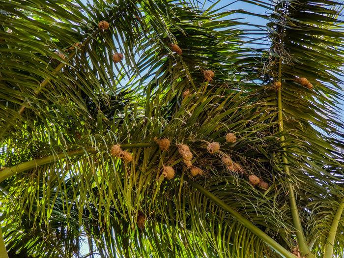 Nest Birds Nest