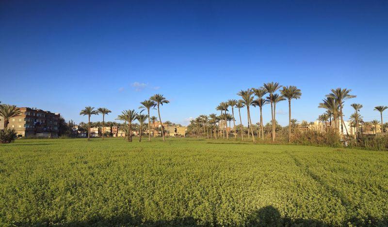 Egyptiqn farmers field Photography Egypt Farmer Landscape Treavelling Morning Sunny Day Nature Sunshine Enjoying Life Green Greenfield Green Fields Green Field Greenfields