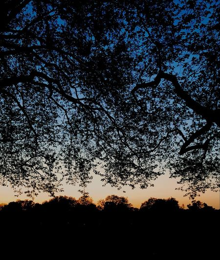 Taken in Victoria Park at sunset. Silhouette Sky Beauty In Nature Plant Tree Nature Sunset