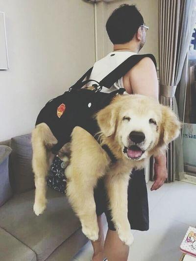 The Best Animal Cute Tierno Tumblr Friendship
