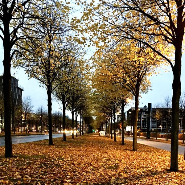 Tree Autumn Nature Outdoors No People Tranquility Treelined Footpath Travel Destinations Beauty In Nature Change Scenics Building Exterior Growth City Leaf The Way Forward Day Architecture Sky