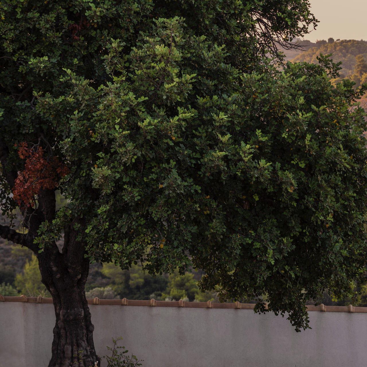 tree, growth, plant, nature, outdoors, no people, day, beauty in nature