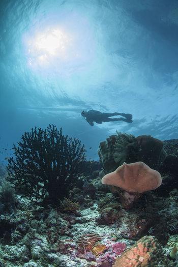Scuba Diver Swimming Above Coral