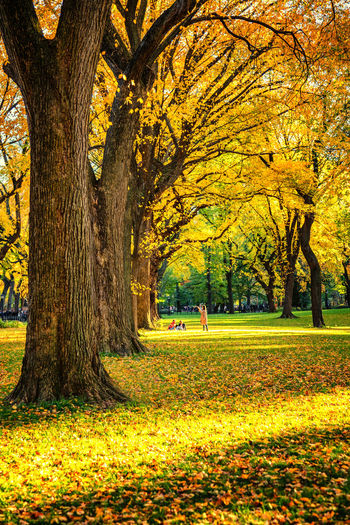 Autumn is here Autumn Tree Plant Change Park Trunk Beauty In Nature Tree Trunk Leaf Yellow Nature Tranquility Incidental People Scenics - Nature Tranquil Scene Grass Land Outdoors Autumn Collection Fall Leaves