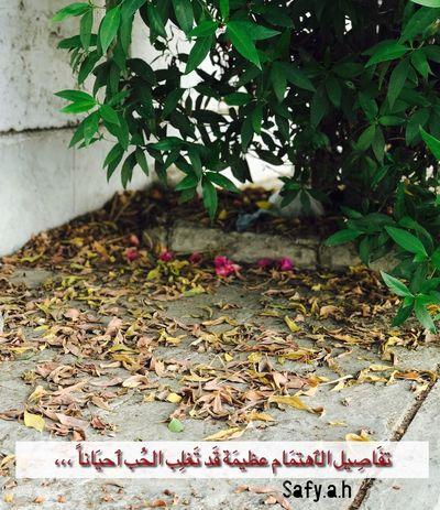 No People Day Green Color Safy.a.h جدة Jeddah عدستي 2017 Pic Saudi من تصويري Postcode Postcards