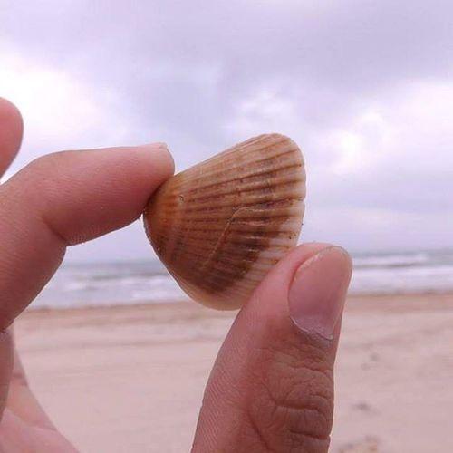 Close-up Seashell Corpus Christi, Tx