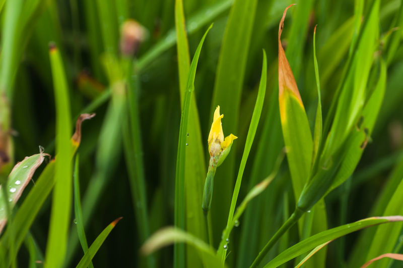 Close-up of green plants on grass