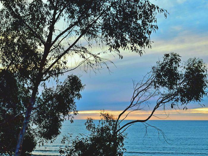 Tree Nature Sea Sunset Sky Growth No People EyeEm Best Shots EyeEm Gallery The Week On Eyem