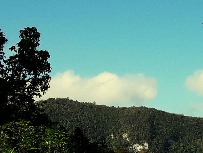 stony hill Tree Blue Sky EyeEmNewHere