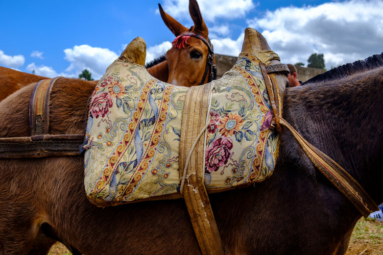 Los Realejos celebrated this Saturday, 26.05.2018, its cattle fair, accompanied by local gastronomy. There are numerous demonstrations of cattle, goats, horses, hounds, pigeons, canaries, chickens and birds of prey. Antique EyeEm Best Shots EyeEm Gallery Saddle Animal Animal Body Part Animal Head  Animal Themes Animal Wildlife Brown Cloud - Sky Day Domestic Domestic Animals Eye4photography  Herbivorous Horse Livestock Mammal No People Old One Animal Pets Vertebrate Working Animal