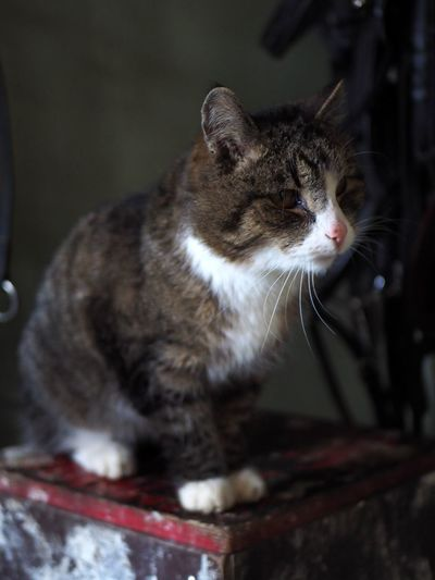 Stable Cat Animal Themes Animal Mammal Domestic Cat Cat Domestic Pets One Animal Feline Domestic Animals Vertebrate Looking No People Indoors  Close-up Looking Away Whisker Sitting Focus On Foreground Selective Focus Tabby Stable