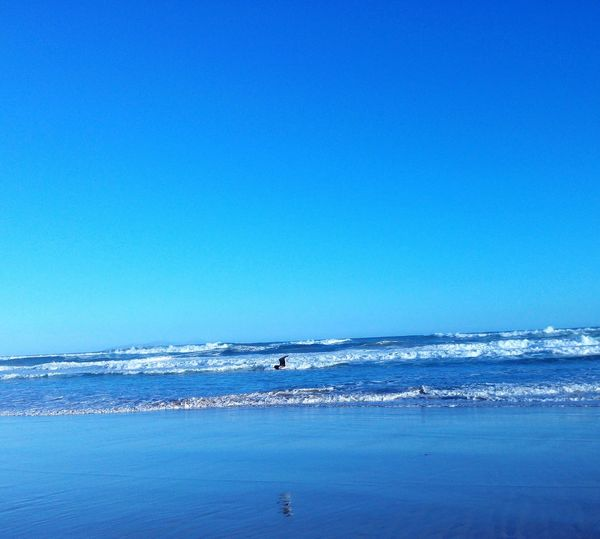 Hanging Out Taking Photos Check This Out Hello World Enjoying Life From My Doorstep Nikon Nikonphotography Photography Canonphotography South Africa Mobile Eyeemphoto Natures Diversities Beautiful Nature Beautiful Day Beautiful View Canon Beach Summer Bird Photography