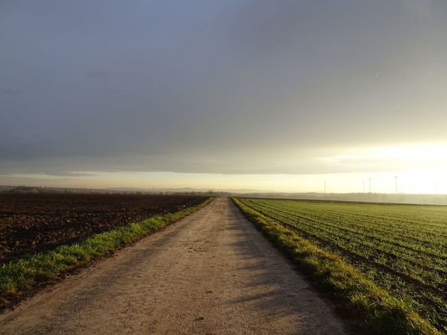 Agriculture Beauty In Nature Diminishing Perspective Direction Dirt Environment Field Land Landscape Nature No People Outdoors Road Rural Scene Scenics - Nature Sky The Way Forward Tranquil Scene Tranquility Transportation vanishing point