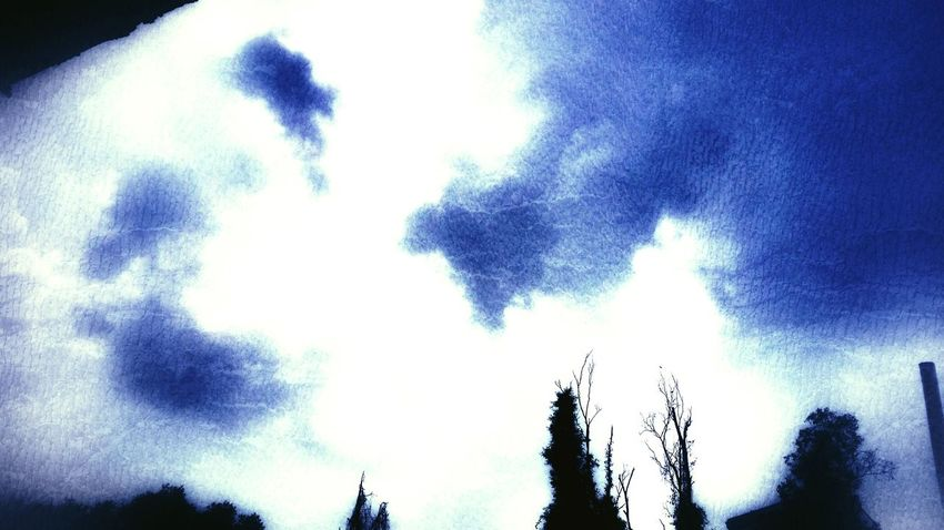 Low Angle View Sky Nature No People Beauty In Nature Close-up Cloud - Sky Outdoors Tree Day Nightshot