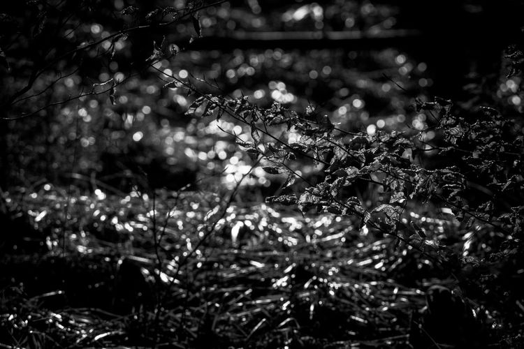 Tree Defocused