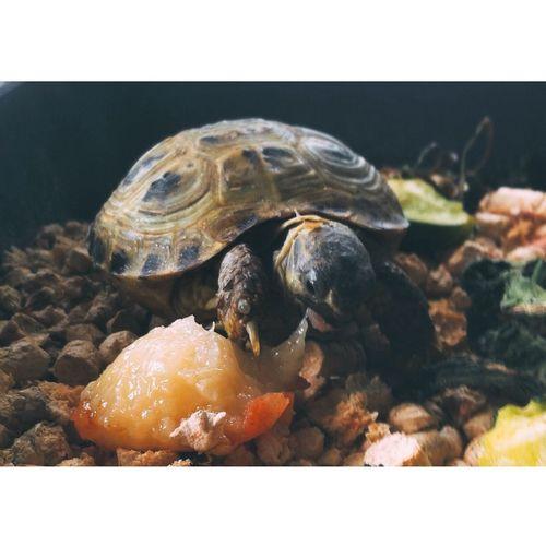 Taking Photos Turtle Animals Dinosaur Photography Enjoying Life Hello World черепаха Cool