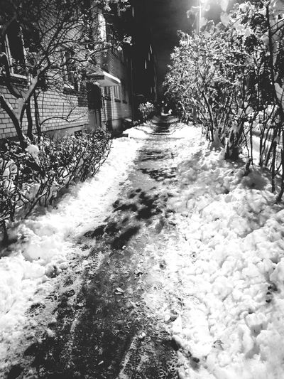 Tree Nature The Way Forward No People Early Snowfall Happy Snow ❄ Angelina B Sony Xperia Photography. Winter Is Coming First Snow Snowflakes Snowfall Evening Night Snow Cold Temperature Winter Wanderlife Black & White Tree Outdoors Kids Happy Beauty In Nature Nature