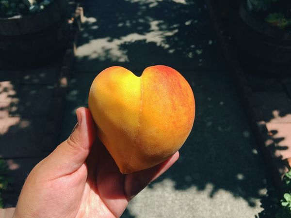 Human Hand Food And Drink Heart Shape Holding Personal Perspective Focus On Foreground Food Fruit Peach Summer Amateur Photography Food Photography