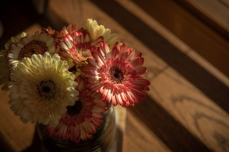 Gerbera Gerbera Daisy Flowering Plant Flower Vulnerability  Fragility Flower Head Close-up Inflorescence Plant Freshness Beauty In Nature Petal No People Nature Indoors  Focus On Foreground Growth Flower Arrangement Daisy Still Life