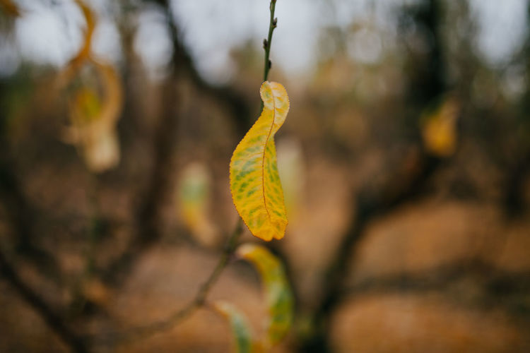 Autumn Autumn Collection Autumn Colors Autumn Leaves Autumn Autumn🍁🍁🍁 Beauty In Nature Catkin Change Close-up Day Focus On Foreground Fragility Growth Leaf Nature Outdoors Plant Winteriscoming Yellow