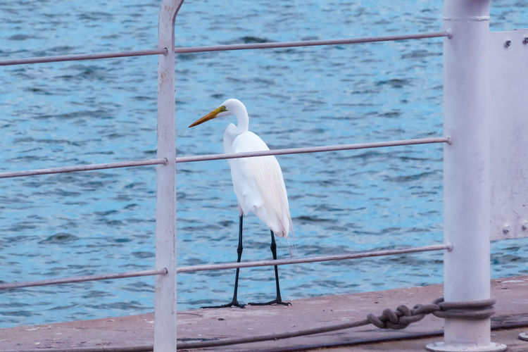 Heron resting on deck Animal Themes Animal Wildlife Animals In The Wild Bird Day Focus On Foreground Heron Nature No People One Animal Outdoors Perching Sea Seagull Water Adapted To The City