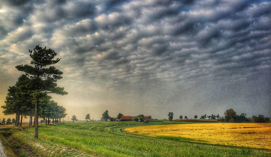 Plant Tree Sky Field Beauty In Nature Growth Land Cloud - Sky Environment Landscape Scenics - Nature Nature Tranquil Scene Tranquility Rural Scene Agriculture No People