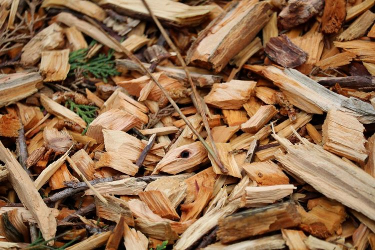 Close-up of wood chips on field